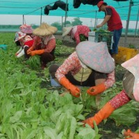 Yunlin County Taiwan's top agricultural producer for fourth year running