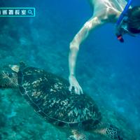 摸一下的代價!德籍少年小琉球觸法送辦 海巡署籲保育海龜