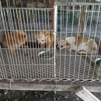 226 dogs and cats in Central Taiwan looking for new homes