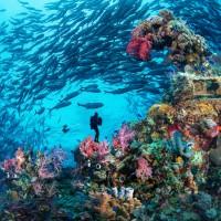 菲律賓線上旅展 5+1天海島遊最低9,900元起