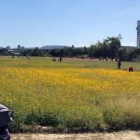 Flower fields bloom near Taipei's Guandu