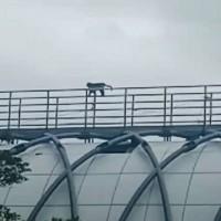 Monkeys use new bridge in E Taiwan to cross natural barrier