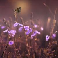 昆蟲數目減少致生態系崩潰  研究:人類光害惹的禍