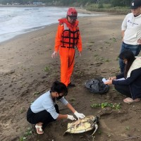 Endangered green sea turtle found dead on North Taiwan beach