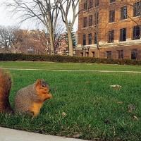 路邊的堅果不要撿   專家:妨礙松鼠取食會破壞繁衍
