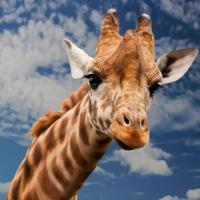 你在想什麼?台灣動物溝通者春花媽 揭露野生動植物心聲