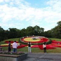 Poinsettias at Taipei's Youth Park celebrate Xmas