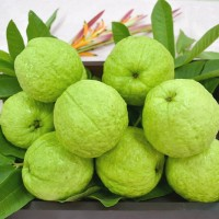 First batch of Taiwan guavas shipped to US hailed as milestone