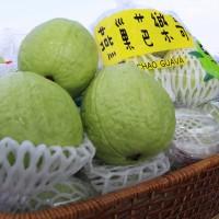 農糧署「公私協力農產品促銷平台」 助農民銷售逾2千噸番石榴