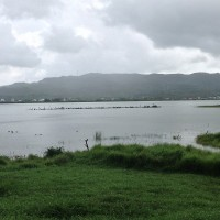 Lungluan Lake in southern Taiwan hailed as 'wild bird paradise'