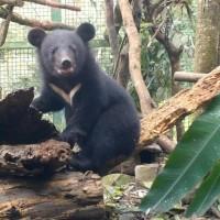 確保台灣黑熊存續 南安小黑熊野放花蓮棲地