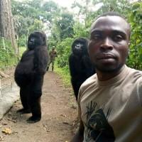 山地大猩猩站姿如人類 背後故事令人鼻酸