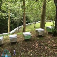 兼顧生態與經濟發展 森林「養蜂種菇」副業上路