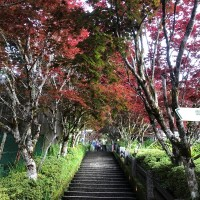 Enjoy dreamy, red maple leaves at Taipingshan Villa in NE Taiwan