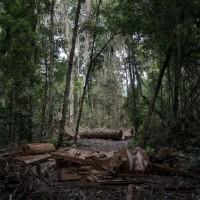 趁火打劫!疫情下執法人員減少 亞馬遜雨林破壞大增