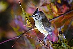 雲海日出仙境之外 阿里山冬季賞鳥驚喜