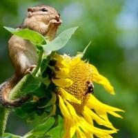 生物多樣性報告敲警鐘 地球面臨社會及生態「緊急狀態」
