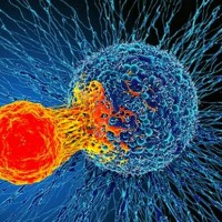 UK research team discovers possible cure for all cancers