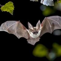 中國今發布最新研究報告:「武漢肺炎」病毒來源可能是蝙蝠