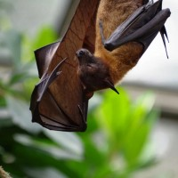 武漢肺炎的省思 人類為何益發容易從動物身上染病?