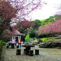 Flower festival on Taipei's Yangmingshan opens amidst Wuhan coronavirus fear