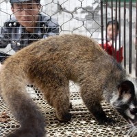 China issues nationwide ban on trade and consumption of wild animals