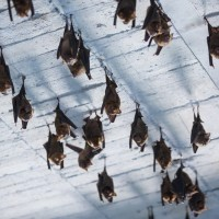 Taiwanese public urged to avoid contact with bats