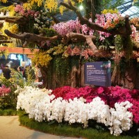 Taiwan International Orchid Show postponed due to coronavirus