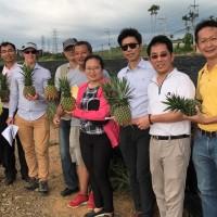 5年協商終成功   澳洲政府同意台灣鳳梨進口