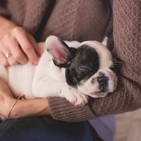全球首例 !香港寵物狗感染武漢肺炎 專家:疑為飼主傳染