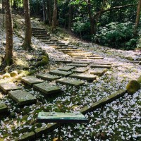Hakka Tung Blossom Festival to kick off across Taiwan in April