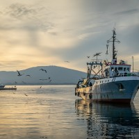 受武漢肺炎疫情影響 台灣日本漁業委員會停開
