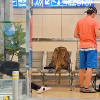 Three foreigners trapped in Taiwan airport due to airline's negligence