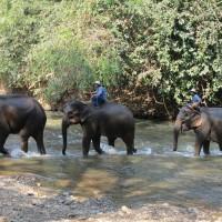 疫情打擊旅遊業 泰國觀光大象挨餓悲歌