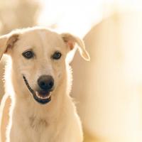 【武漢肺炎】中國將狗列為「伴侶動物」不可吃 引發網上正反兩面意見