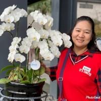 從不懂中文到計畫創業 印尼通譯陳鳳玲用毅力打造生活