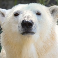 【武漢肺炎】遊客銳減恐斷炊 德國動物園擬「宰了牠來餵牠」
