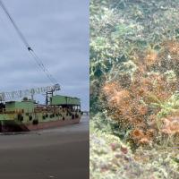 Beached ship harms local marine fauna in N. Taiwan