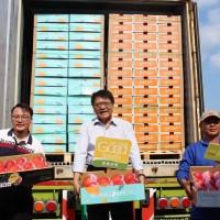 【武漢肺炎】全球疫情中逆勢成長    屏東芒果出口香港正式封櫃