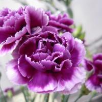 振興花卉消費市場 農委會與超市量販業者合作
