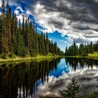 拯救生物多樣性 歐盟訂10年種30億棵樹目標