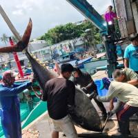 Big boom in Pacific Bluefin Tuna caught off Taiwan