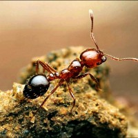 300 fire ants found in Chinese containers arriving in Japan