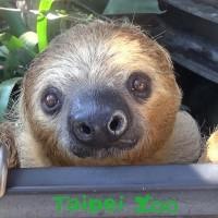 【台灣熱門景點】北市動物園休園10天進行修繕 端午連假重新開放