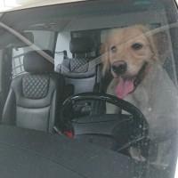 飼主當心!犬隻留置車內已觸法 台北市動保處首開罰