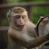 Alcoholic monkey gets life sentence in India after attacking 250 pedestrians