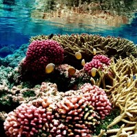 Typhoon saved S. Taiwan's coral reefs from bleaching: Researcher