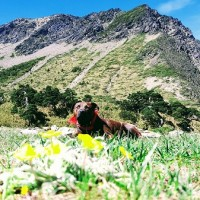 Stray pitbull wanders Taiwan's mountains 3,000 meters above sea level