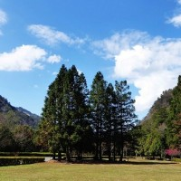 Double discount deal available for travelers to Taiwan's Aowanda forest area