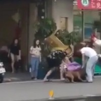 5 adults unable to stop pit bull from mauling dog in S.W. Taiwan